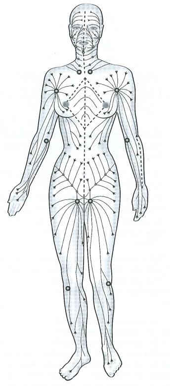 Sens du Système Lymphatique